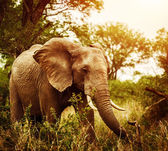 Huge elephant outdoors — Stock Photo