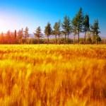 Beautiful autumn nature — Stock Photo