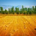 乾燥したフィールドで干し草の山 — ストック写真