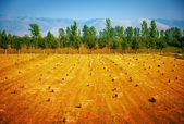 Haystacks on dry field — Stock Photo