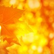 Autumnal foliage background — Stock Photo #33919909