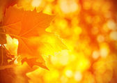 Autumnal foliage background — Stock Photo
