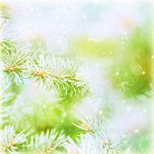 Evergreen tree branch backdrop — Stock Photo