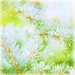 Pine tree branch background — Stock Photo