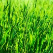 Fresh green grass background — Stock Photo