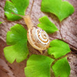 Little snail — Stock Photo