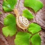Little snail — Stock Photo