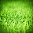 Stock Photo: Spring green grass background