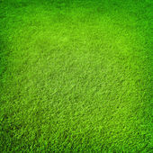 Green grass background — Stock Photo