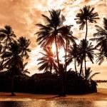 Tropical beach on sunset — Stock Photo