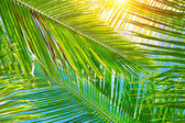 Fresh palm leaves background — Stock Photo