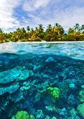 Beautiful marine life — Stock Photo