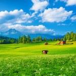 Beautiful landscape — Stock Photo #46418055
