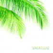 Palm tree leaves border — Stock Photo #46418405