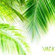Palm tree leaves border — Stock Photo #49035979