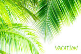 Palm tree leaves border — Stock Photo