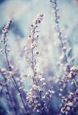 Niebieskim tle kwiatów — Zdjęcie stockowe