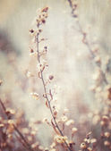 Abstract floral background — Stock Photo