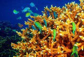 Coral reef background — Stock Photo