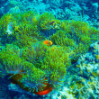 Coral reef underwater background — Stock Photo #50161591