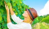 Woman pluck grape — Stockfoto