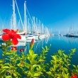 Red flower at the yacht port, selective focus — Stock Photo #6771451