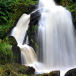 Waterfall in the Black Forest in Triberg — Stock Photo #40972437