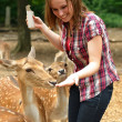 Woman feeding deer in a park — Stock Photo