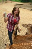 Woman feeding a young deer — Stock Photo