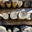 Wooden logs stored on the stack — Stock Photo