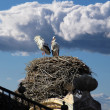 Large storks nest with sky and clouds background — Stock Photo