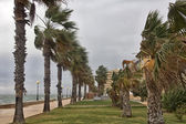 A storm wind stirred the palms of the coast — Stock Photo