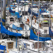 Many white yachts with blue tarps together - Stockfoto