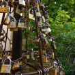 Stock Photo: Tree full of padlocks placed by love