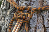 Macro climbing rope tied to a big tree — Stock Photo
