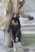 Huge bear very expressive — Stock Photo