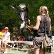 Stock Photo: Woman falconry a display of birds of prey