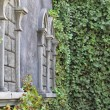 Old stone house with lots of vegetation — ストック写真 #29682215