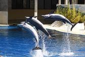 Dolfijnen springen in het water — Stockfoto