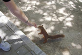 Sympathetic squirrel eating from hand — Stock Photo