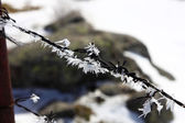 Fence of thorns full of ice on wires — Foto Stock