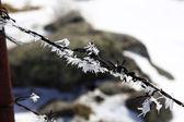 Valla de lleno de hielo en los alambres de espinos — Foto de Stock