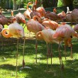 Stock Photo: Flamingos on green background