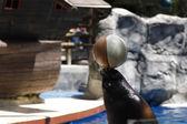 Fazendo o leão-marinho equilibrando uma bola no nariz — Foto Stock