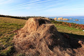 Bale of straw on a steep meadow by the sea — Stock Photo