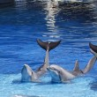Stock Photo: Dolphins waving its tail raised
