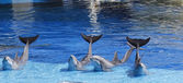 Dolphins waving its tail raised — Stock Photo