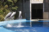 Dolphins jumping in the water — Foto de Stock