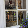 Stock Photo: Street observed two dogs hidden behind the windowpanes