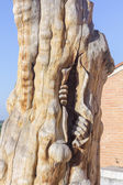 Sculpture man emerging from inside a tree — Stock Photo